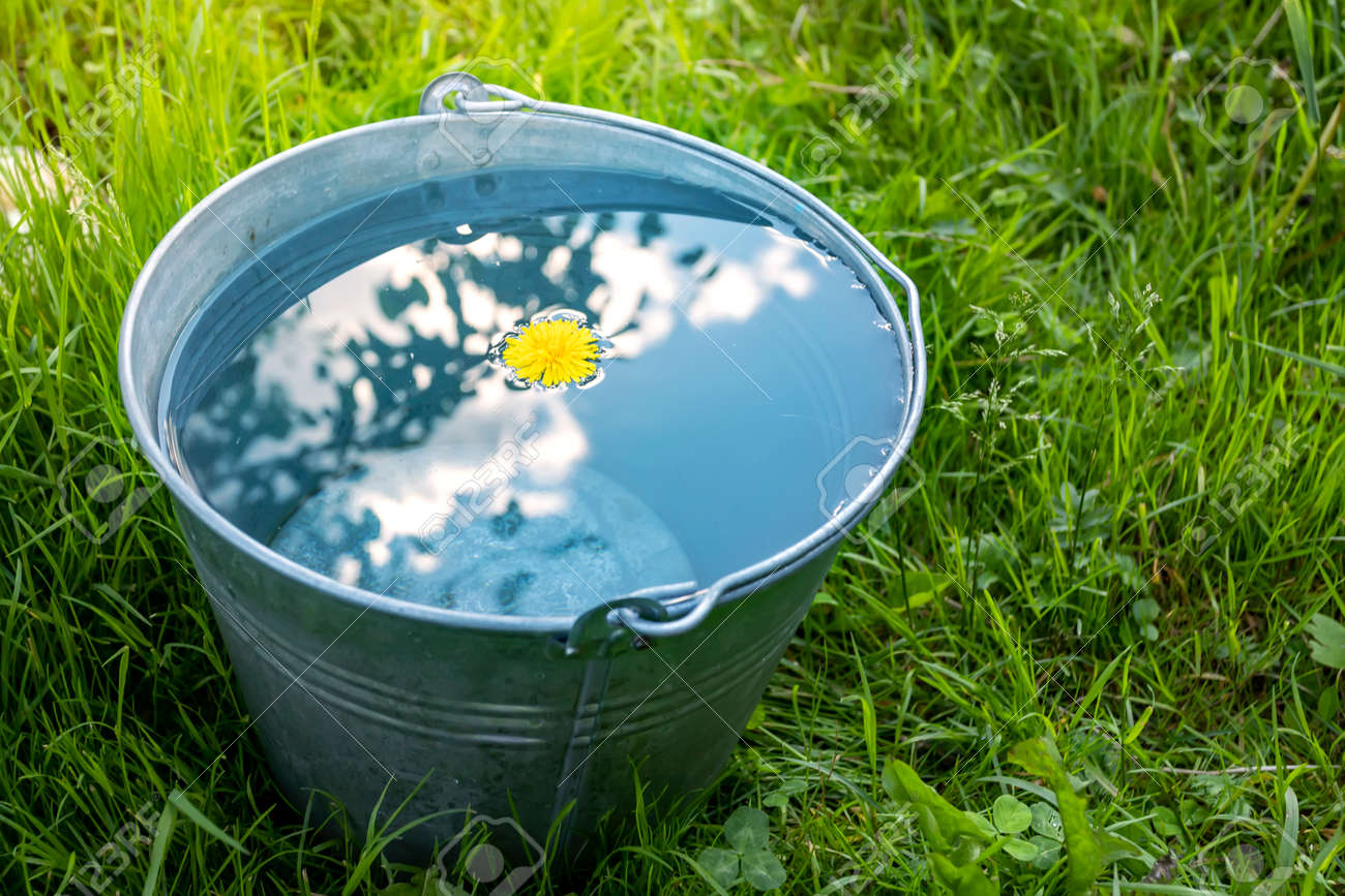 A metal bucket of water stands in the green grass on a sunny day - 151152522