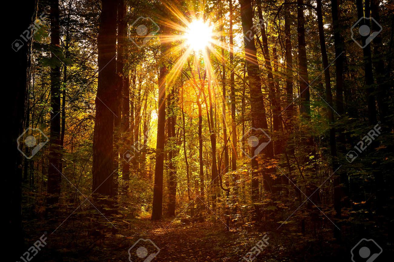 Autumn golden forest. Park recreation area. Autumn in Russia - 167487453