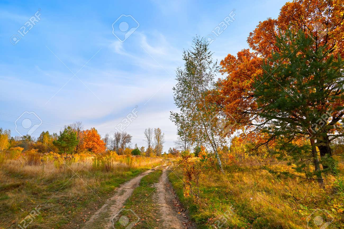 Autumn landscape. Beautiful sunny autumn day - 167488033
