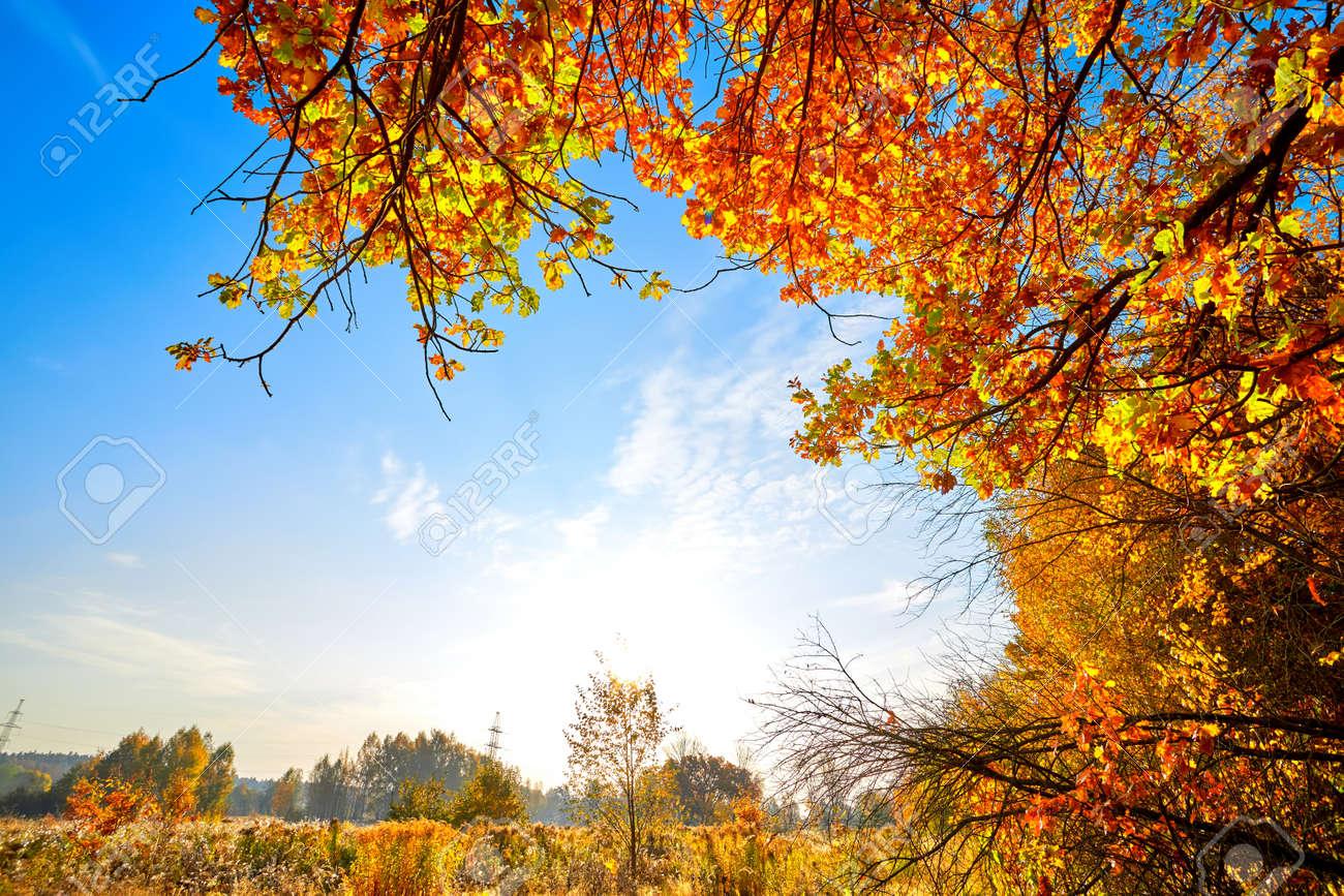 Autumn golden forest. Park recreation area. Autumn in Russia - 169789070