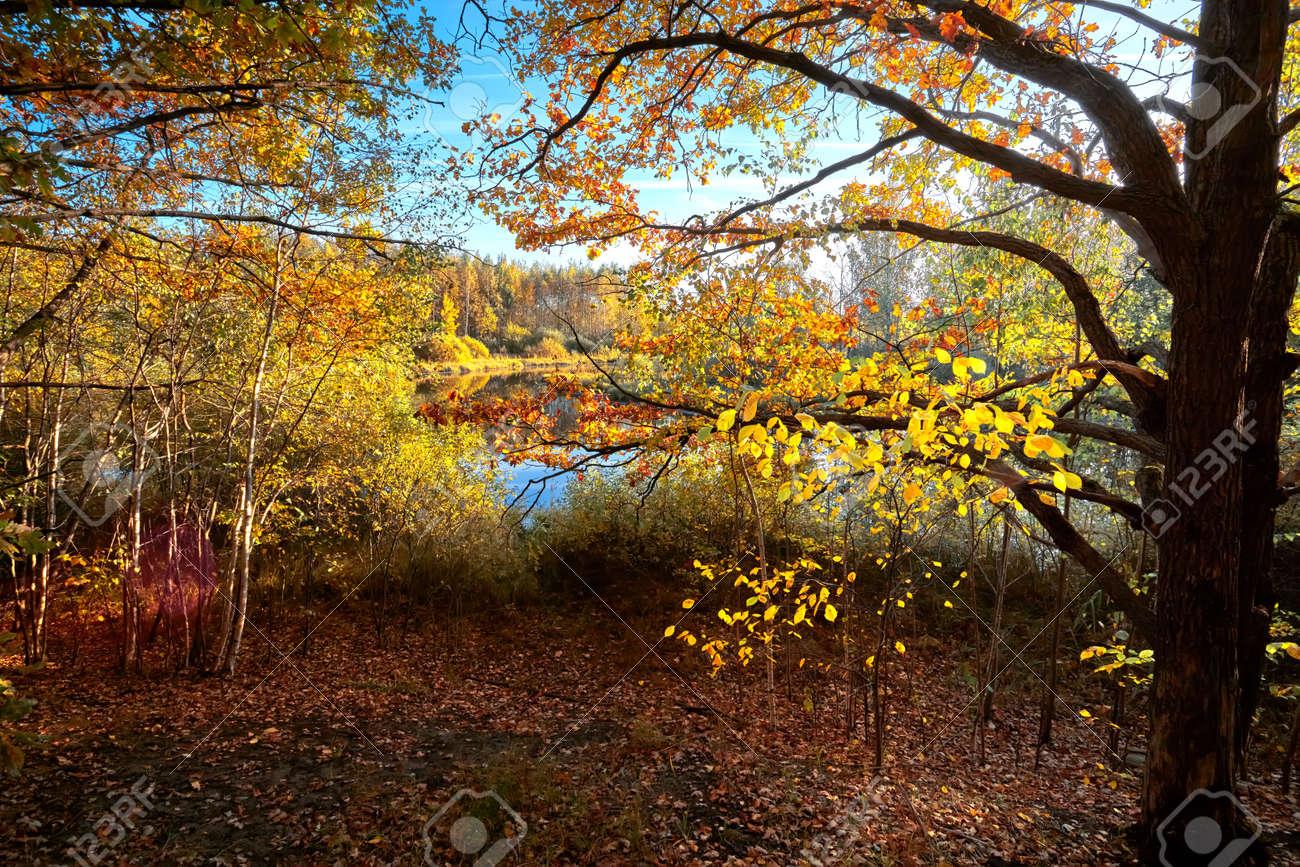 Autumn golden forest. Park recreation area. Autumn in Russia - 169789073