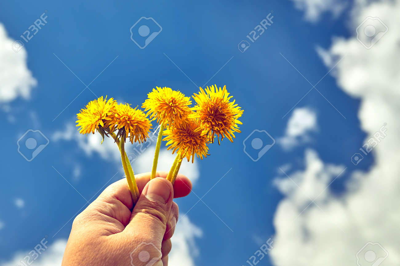Hand holding yellow dandelions flower. Blue sky and clouds on background. Environmental concept - 169789119