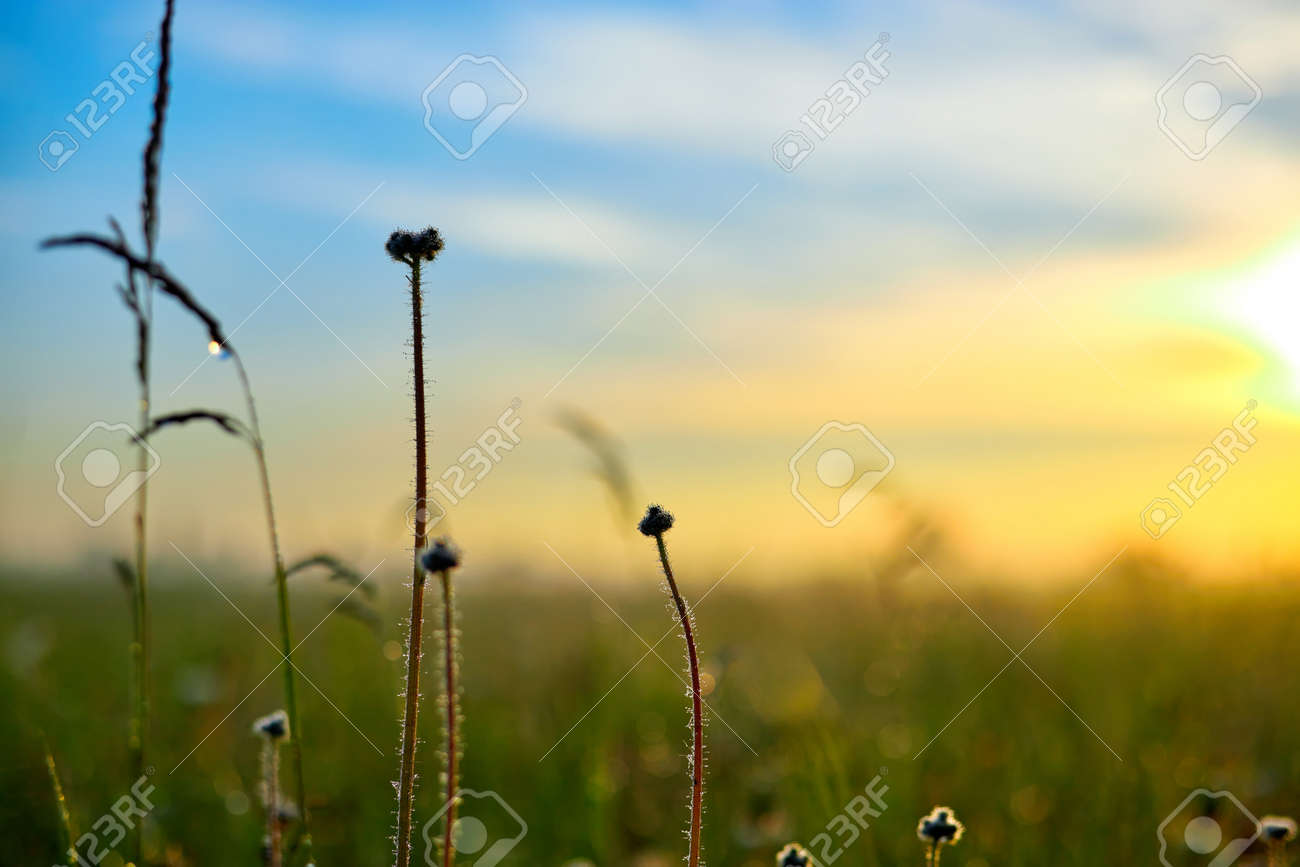 Summer landscape with flower meadow and grass in the sky on sunrise. Summer morning - 169789127