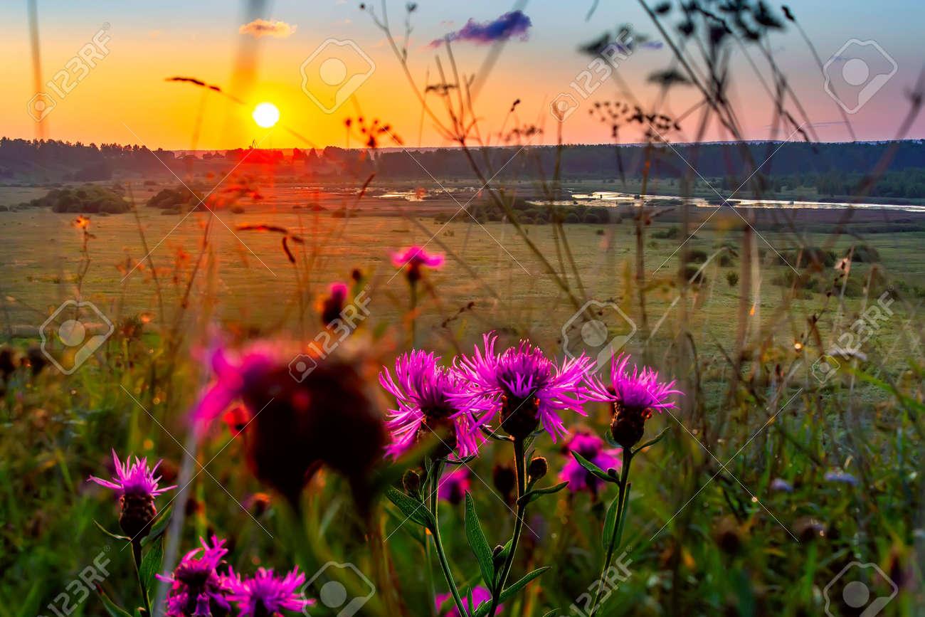 Summer sunrise in the field. Rustic landscape. - 169789130