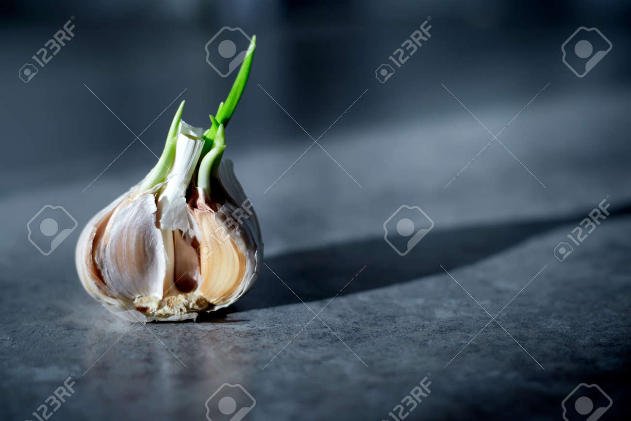 Organic food. Garlic lies on a gray table and illuminated by the sun - 172032609