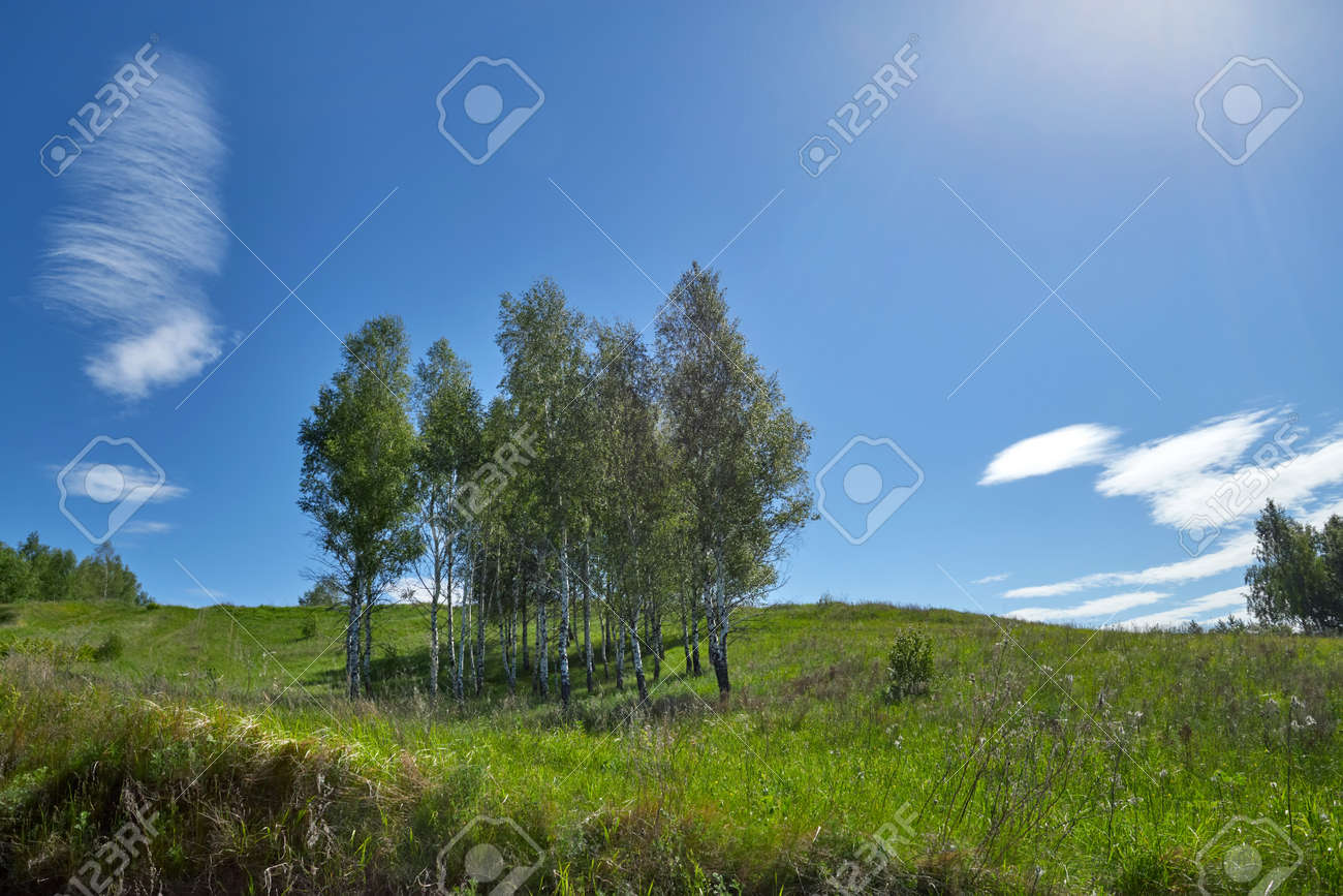 Birches grow on a hill. Sunny summer day - 170265735