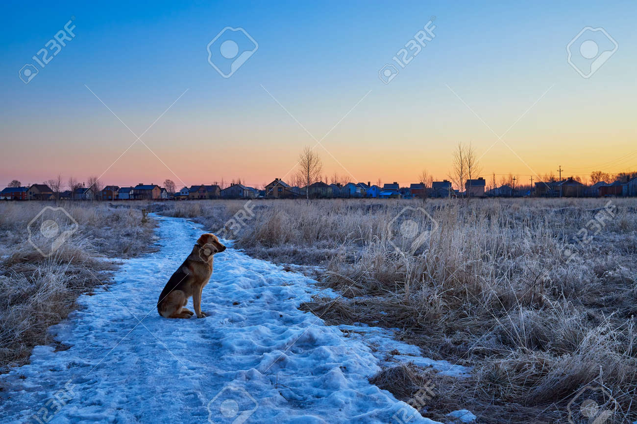 The dog sits on the snow and meets the spring sunrise - 171641345