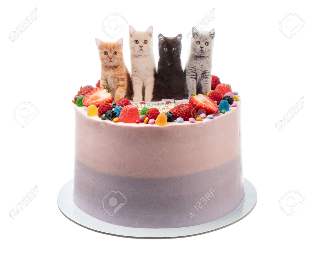Super Cheerful Birthday Cake Made Of Sweets And Cats Stock Photo Personalised Birthday Cards Paralily Jamesorg