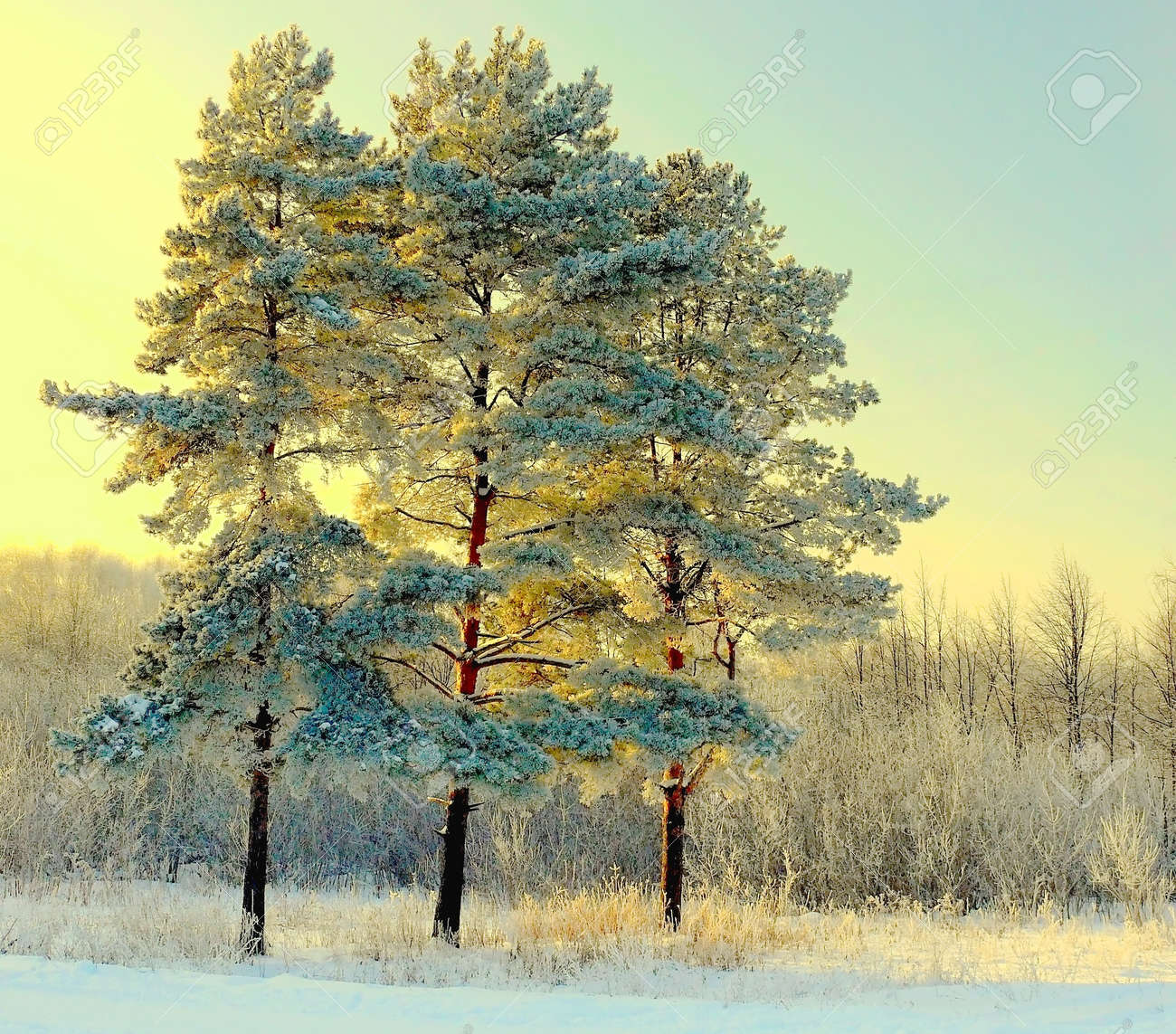 Beautiful landscape with winter forest Stock Photo - 13396583