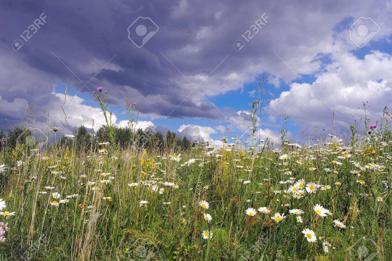 Beautiful summer landscape Stock Photo - 30166626