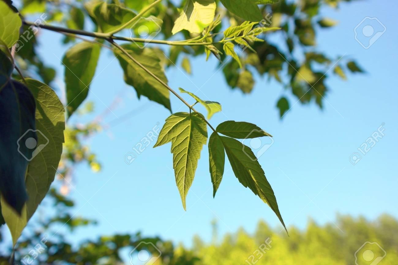 Green leaves over blue sky, shallow DOF Stock Photo - 30714618