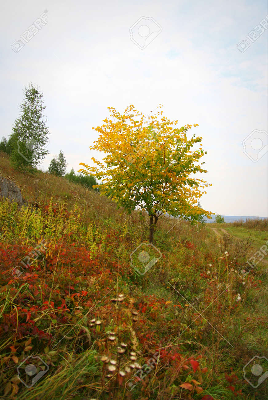 Beautiful autumn landscape with trees Stock Photo - 35710824