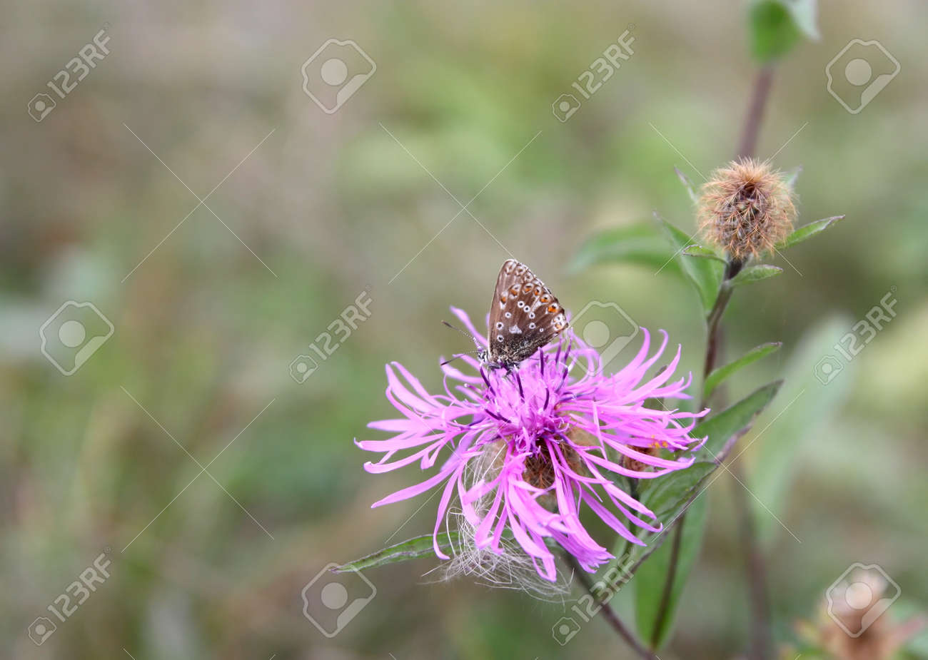 Butterfly sitting on a flower, shallow dof Stock Photo - 35711132