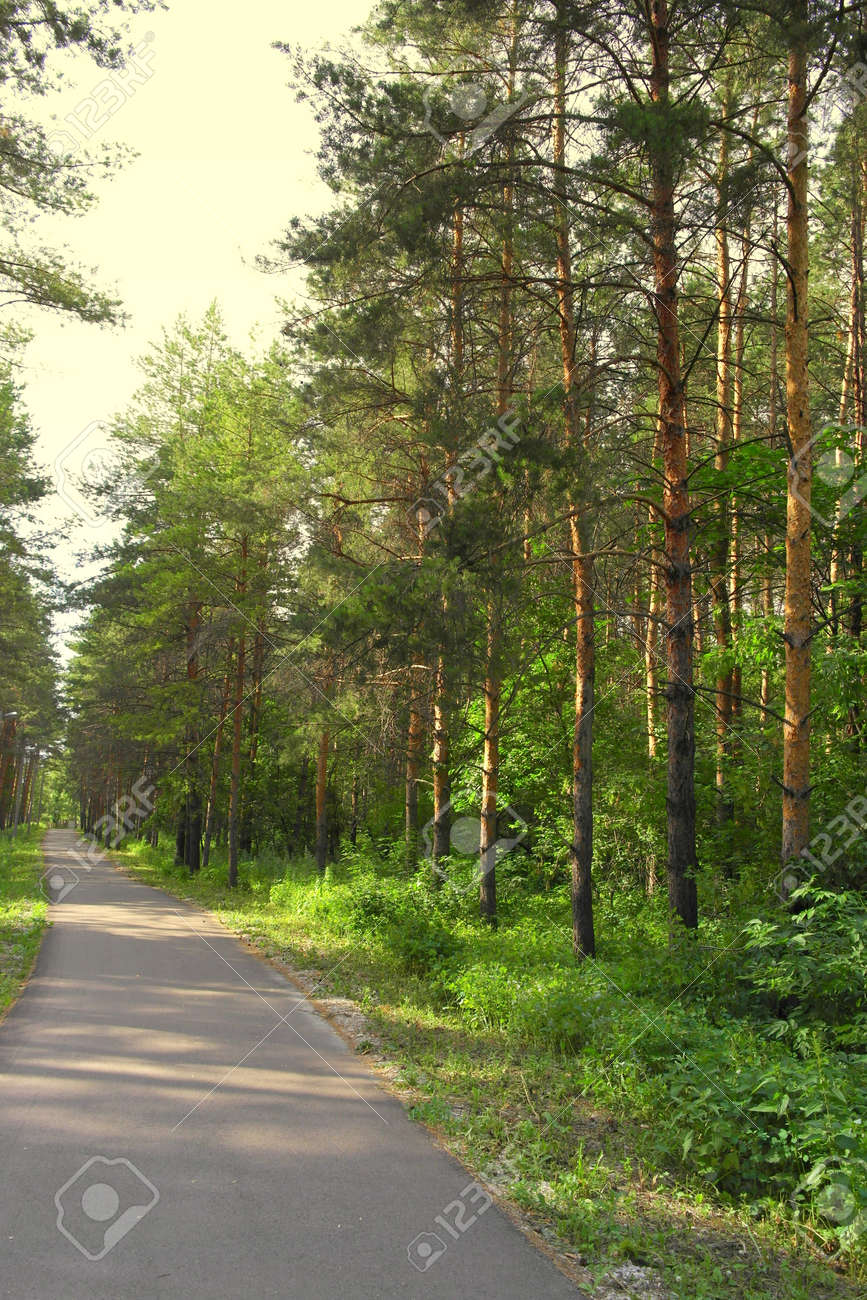Summer landscape, forest with pines Stock Photo - 48216216