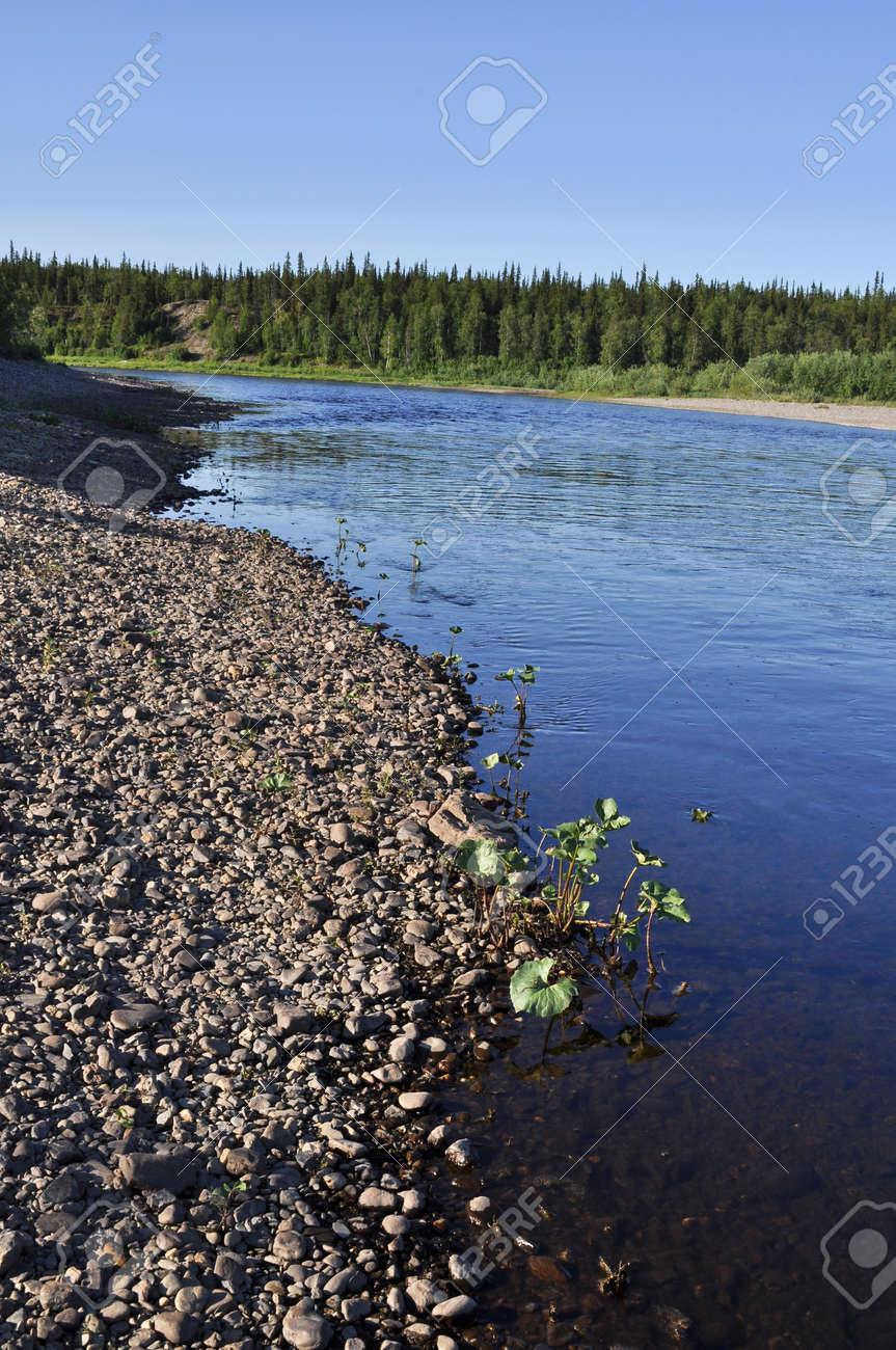 ウラル川の小石のビーチ。大河川...