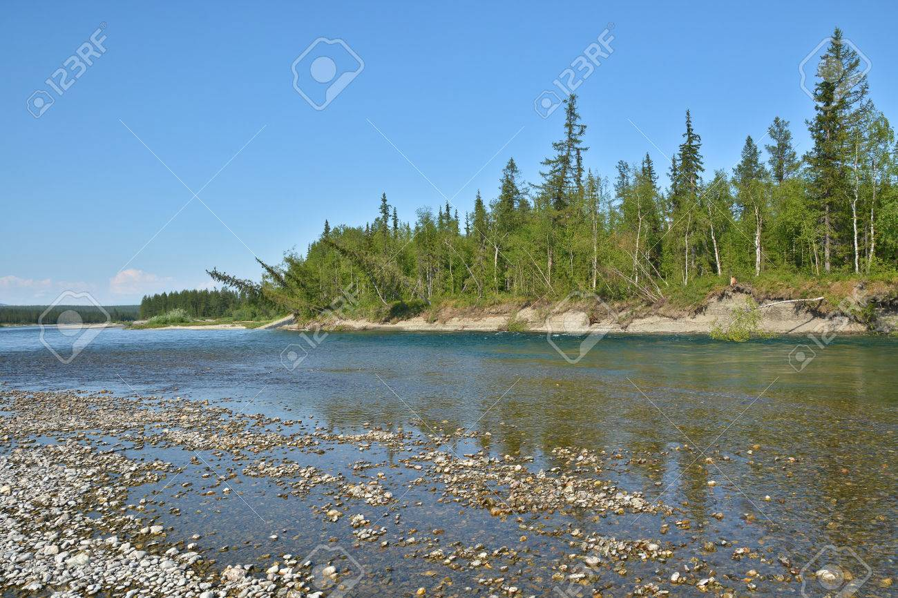 北極ウラル川。ロシアの北の夏の...