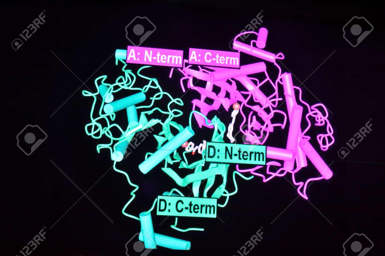 高 分子 生体