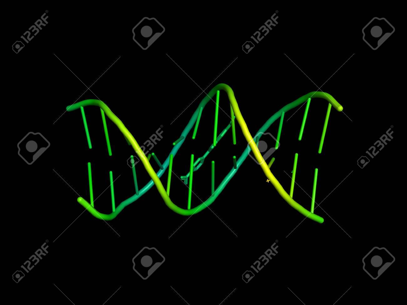 3d model of dna structure of biological macromolecules stock photo 3d model of dna structure of biological macromolecules stock photo 99861977 ccuart Gallery