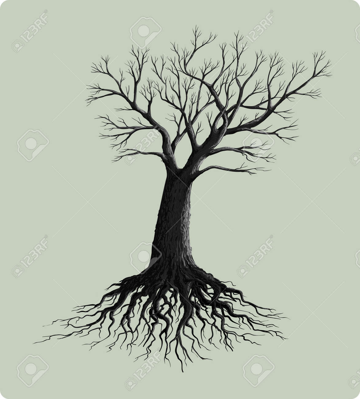 tree root stock photos u0026 pictures royalty free tree root images