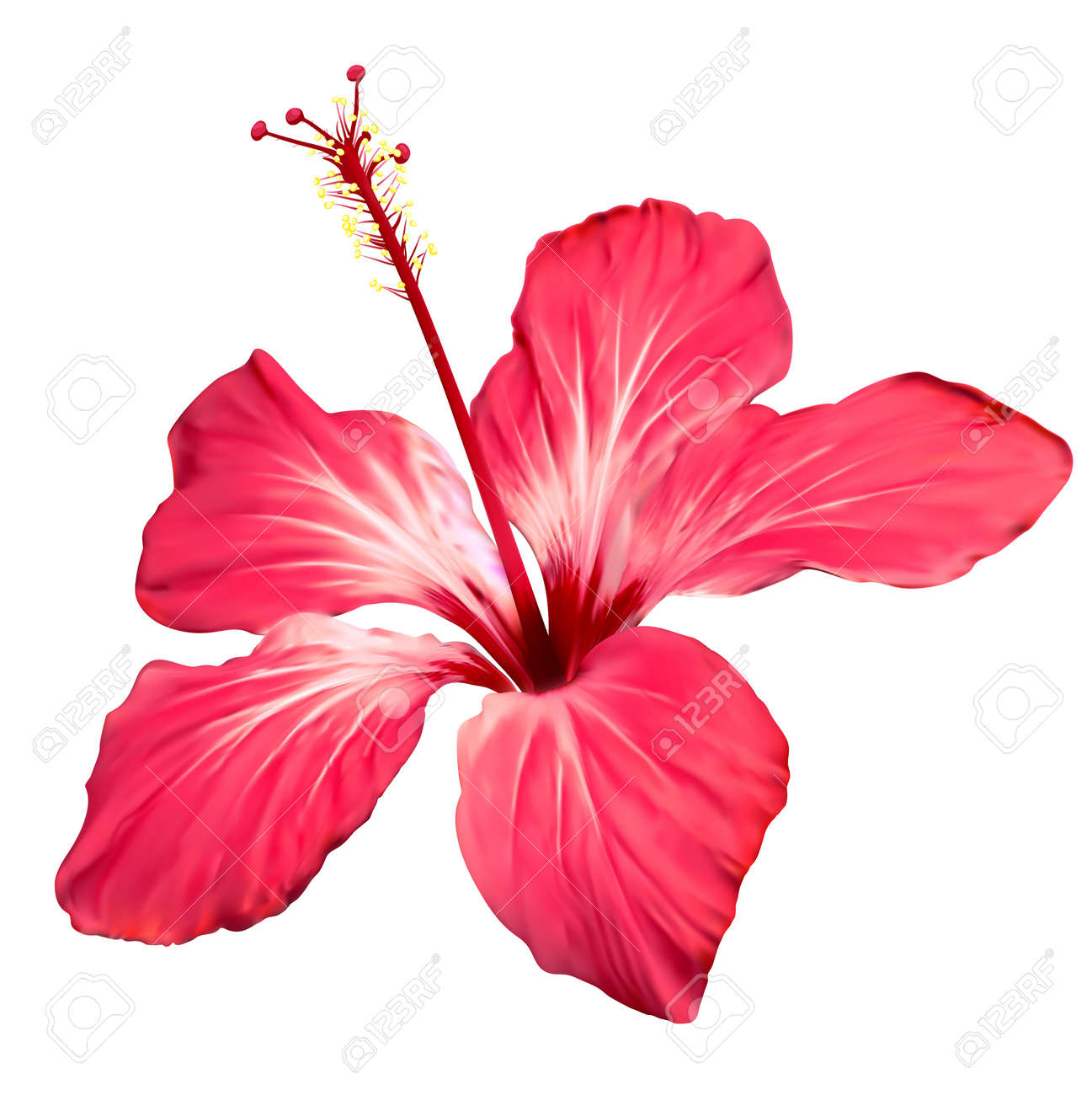 Hibiscus Flower Blossom Vector Art Royalty Free Cliparts Vectors