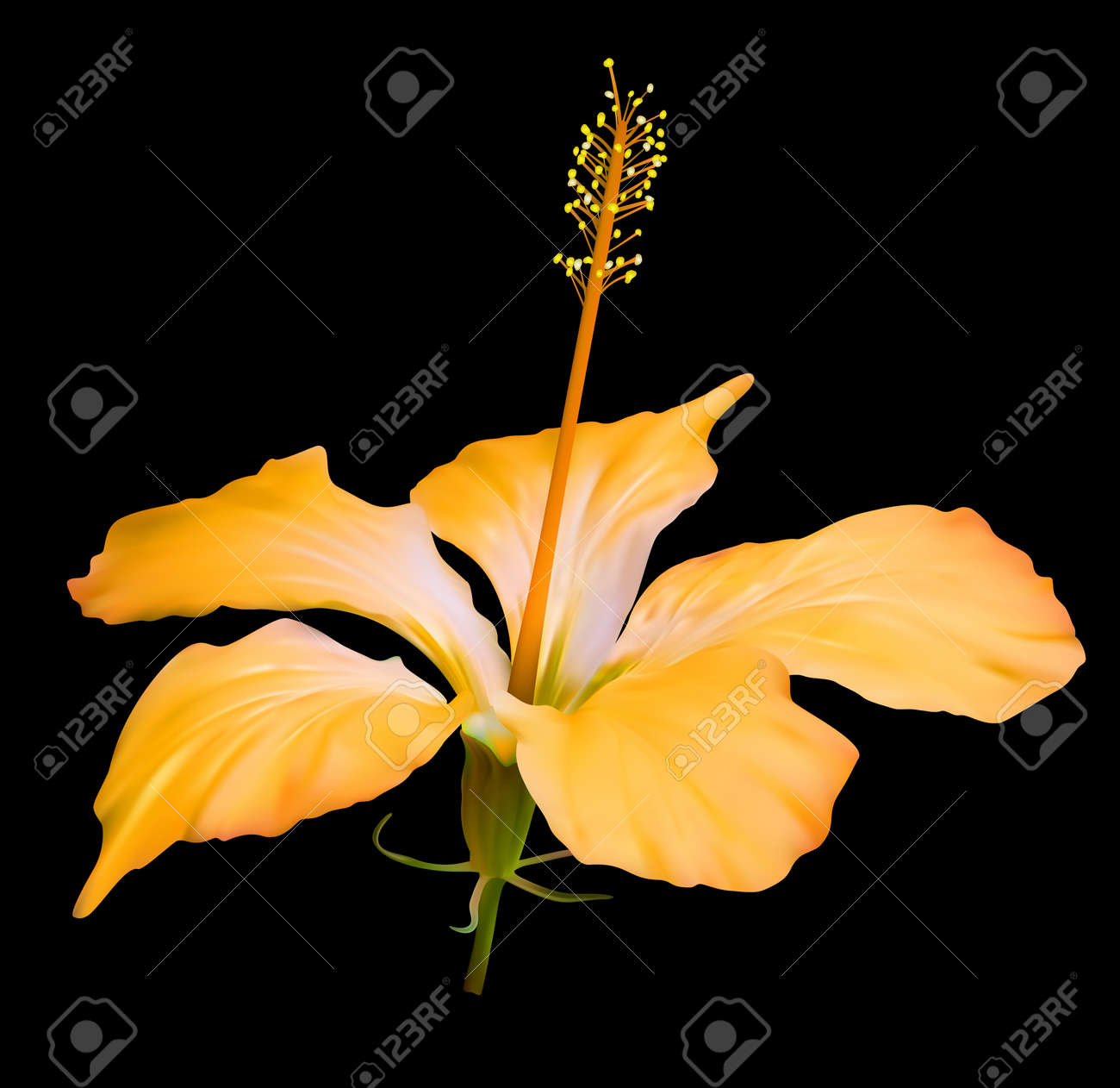 Yellow hibiscus flower blossom on black background royalty free vector yellow hibiscus flower blossom on black background izmirmasajfo