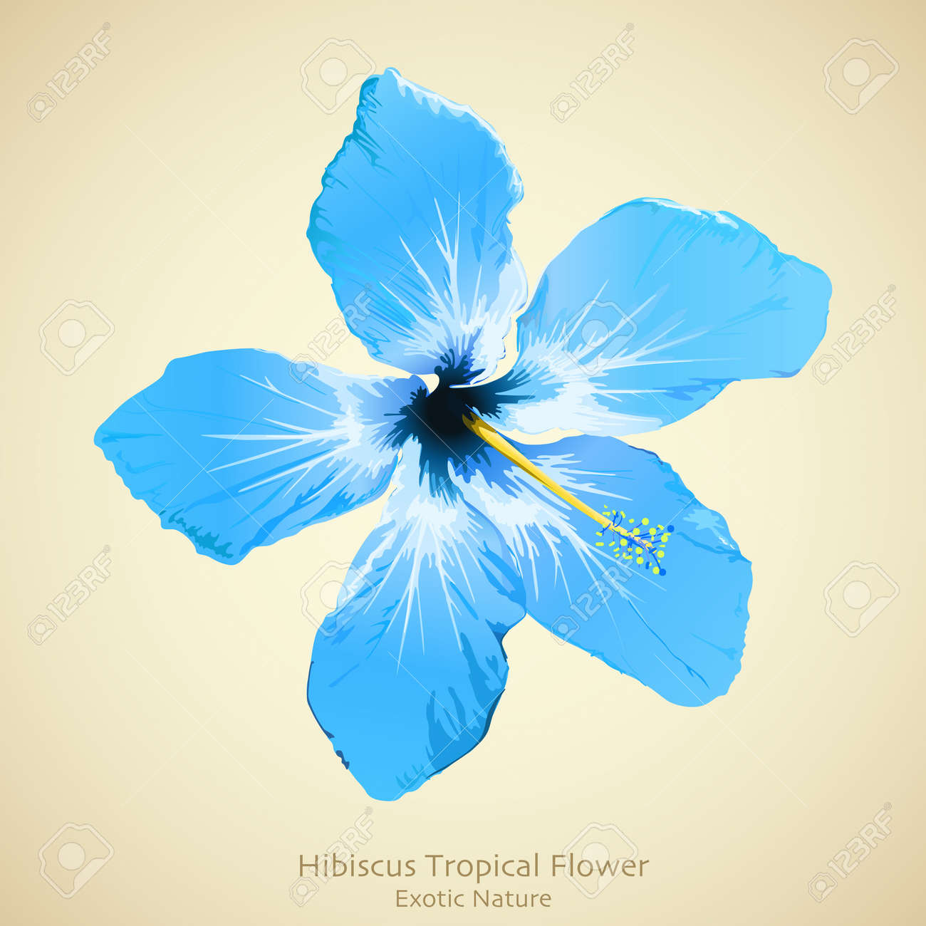 Hibiscus Flower Illustration Tropical Background Design Royalty