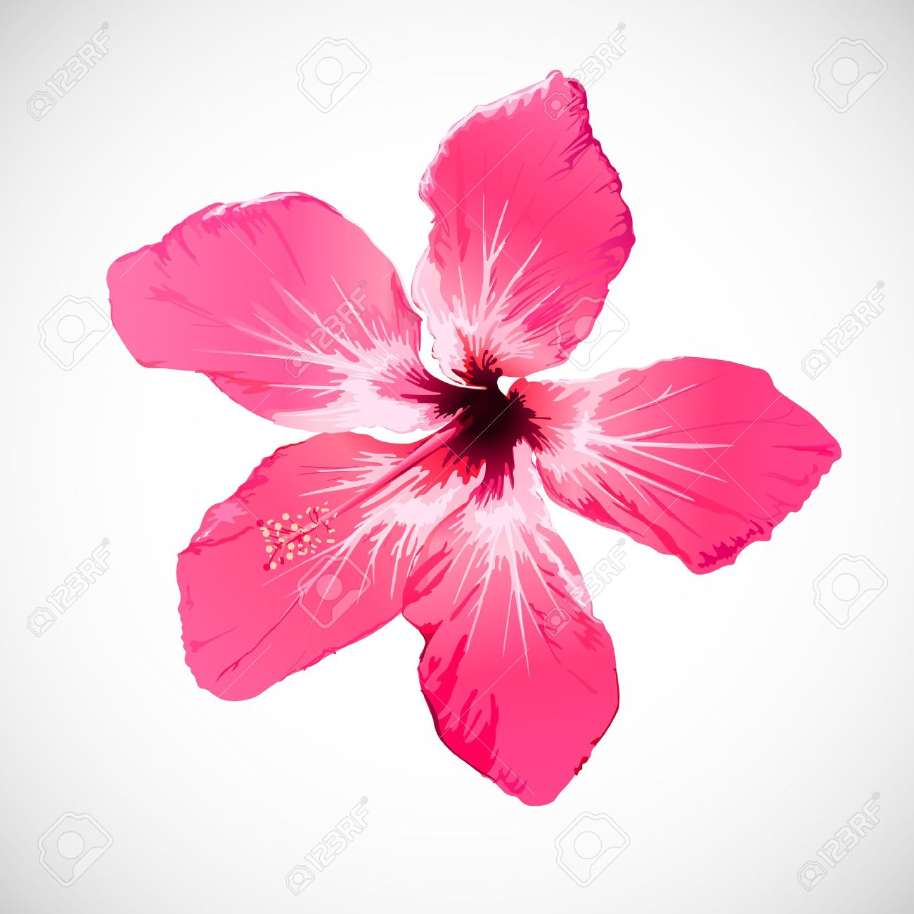 Hibiscus Tropical Flower Art Royalty Free Cliparts Vectors And