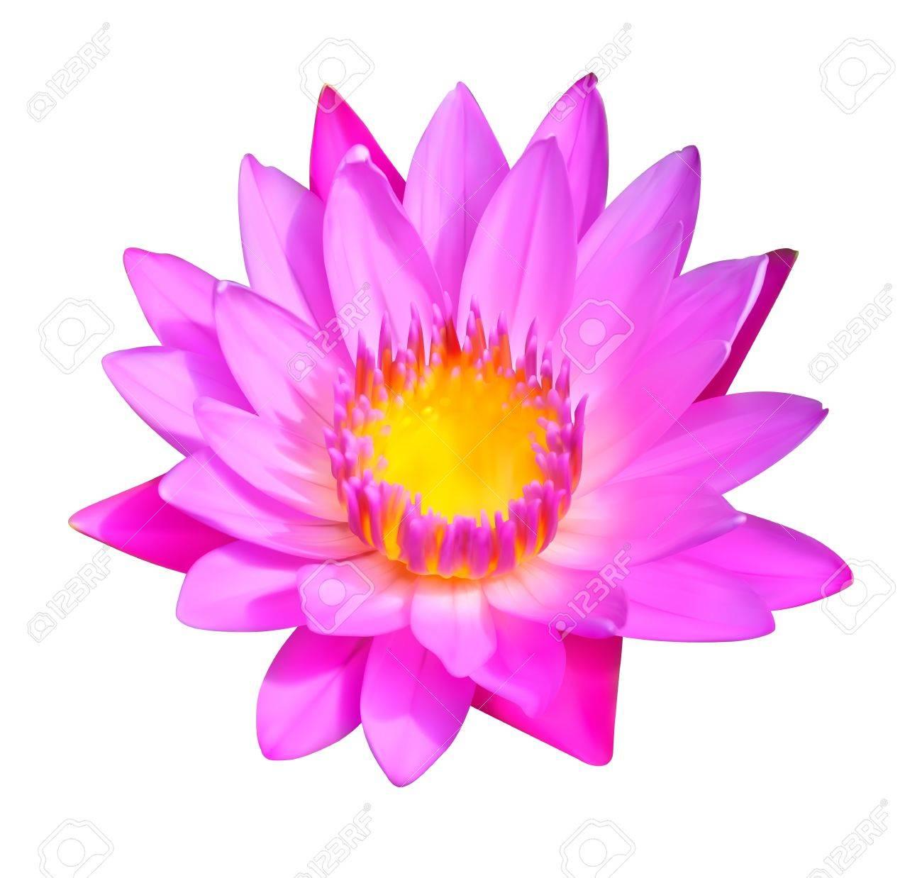 花のアイコン睡蓮花イラストのイラスト素材ベクタ Image 15654640