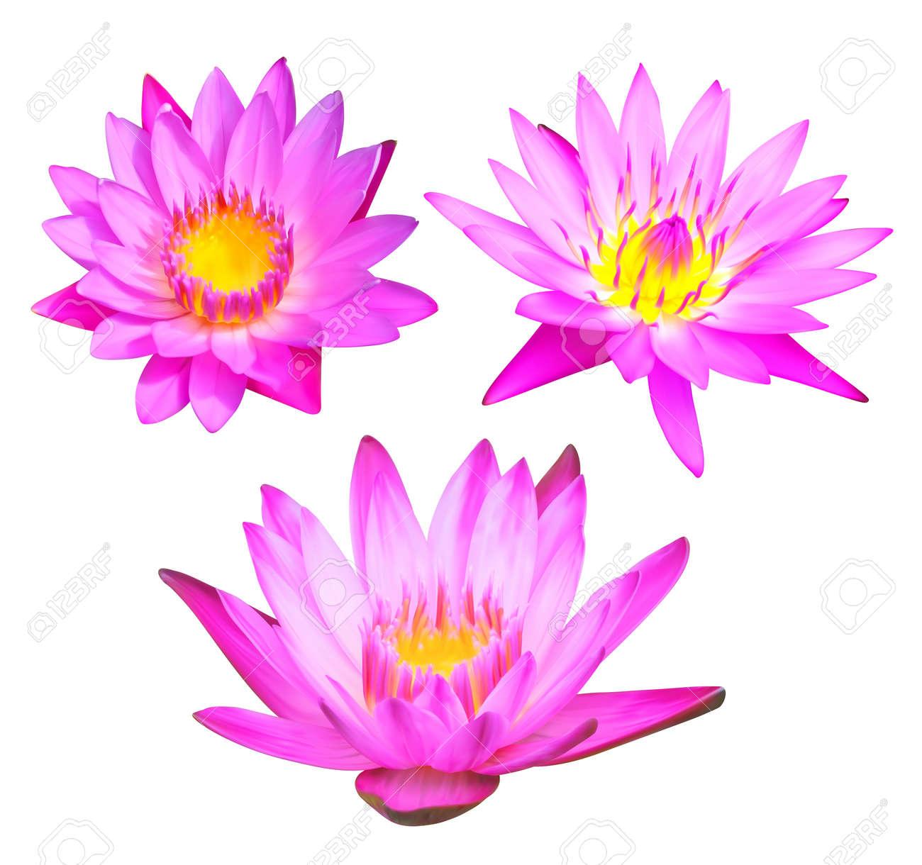 Water Lilies Stock Vector - 16194570