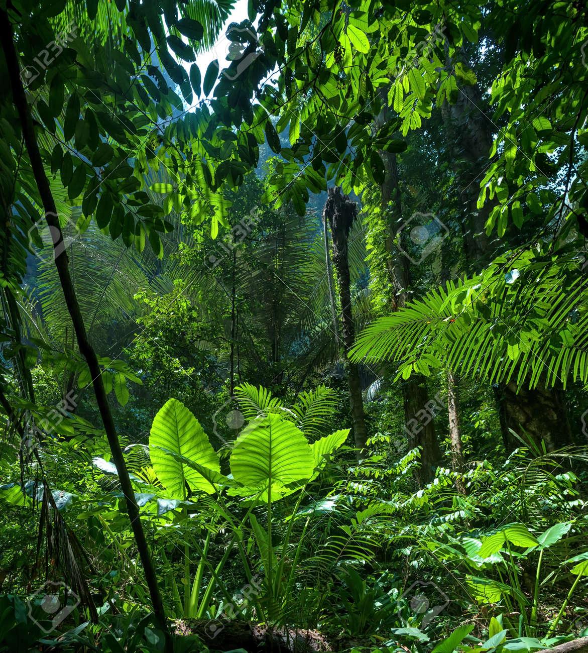 adventure background green jungle forest landscape stock photo