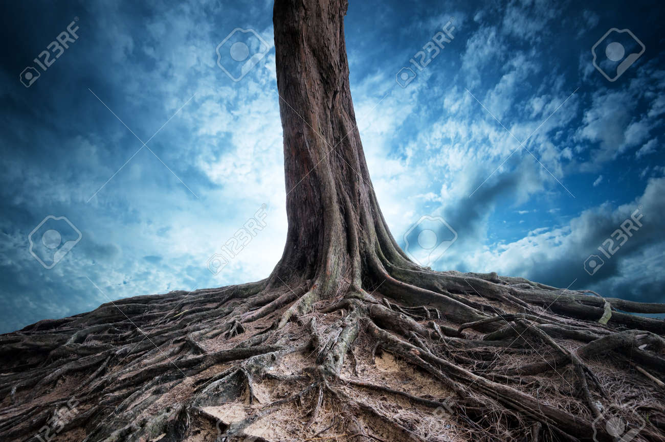 Scenic background of old tree and roots at night  Moon light magic and mystery landscape Stock Photo - 21618561