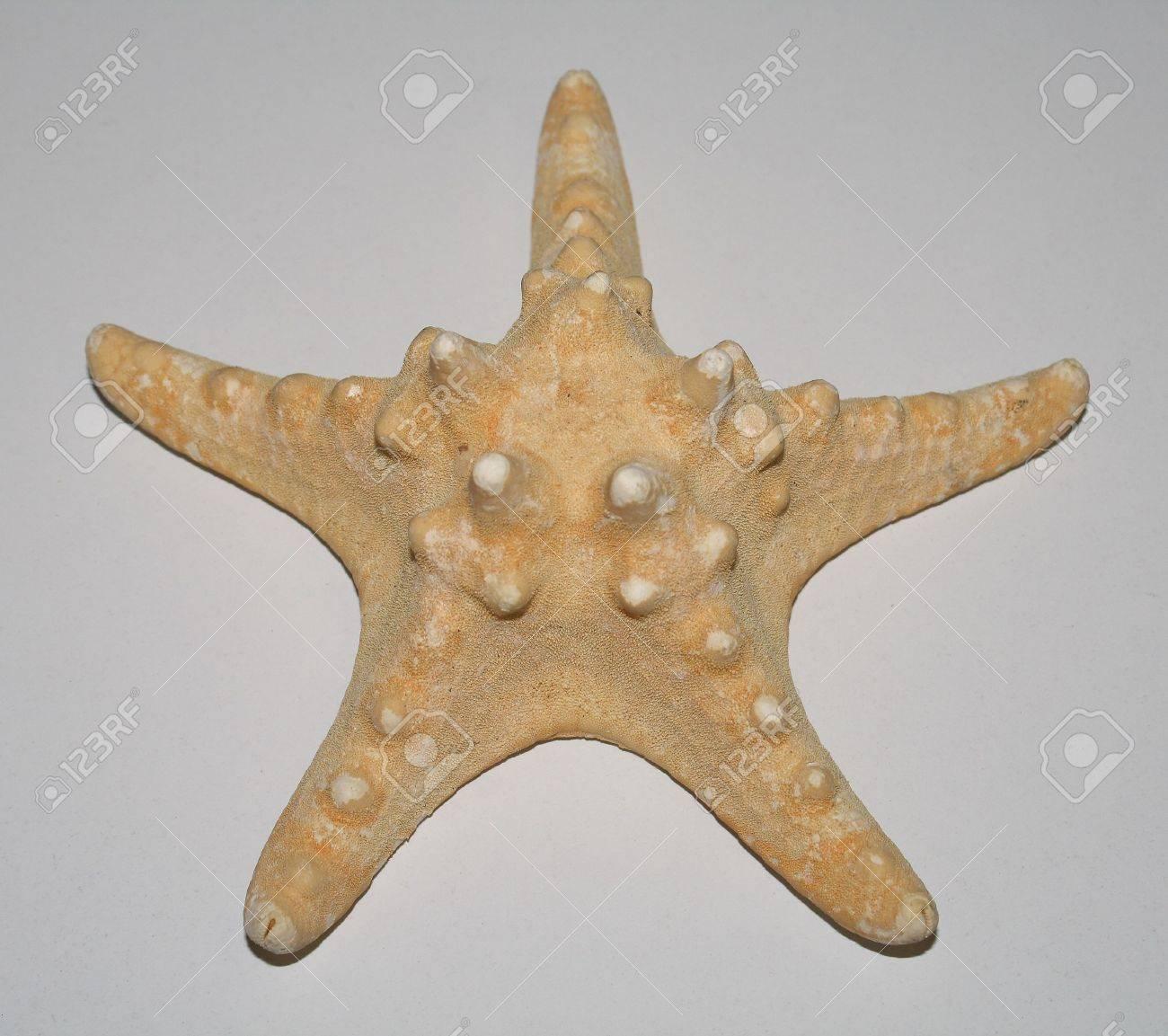 La naturaleza sin vida de estrella de mar  Foto de archivo - 5862396