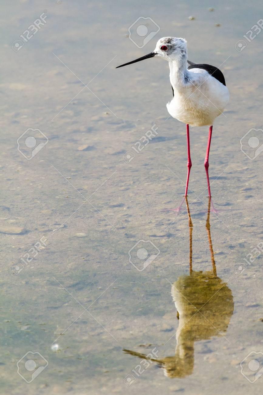 Long Legged Wading Bird