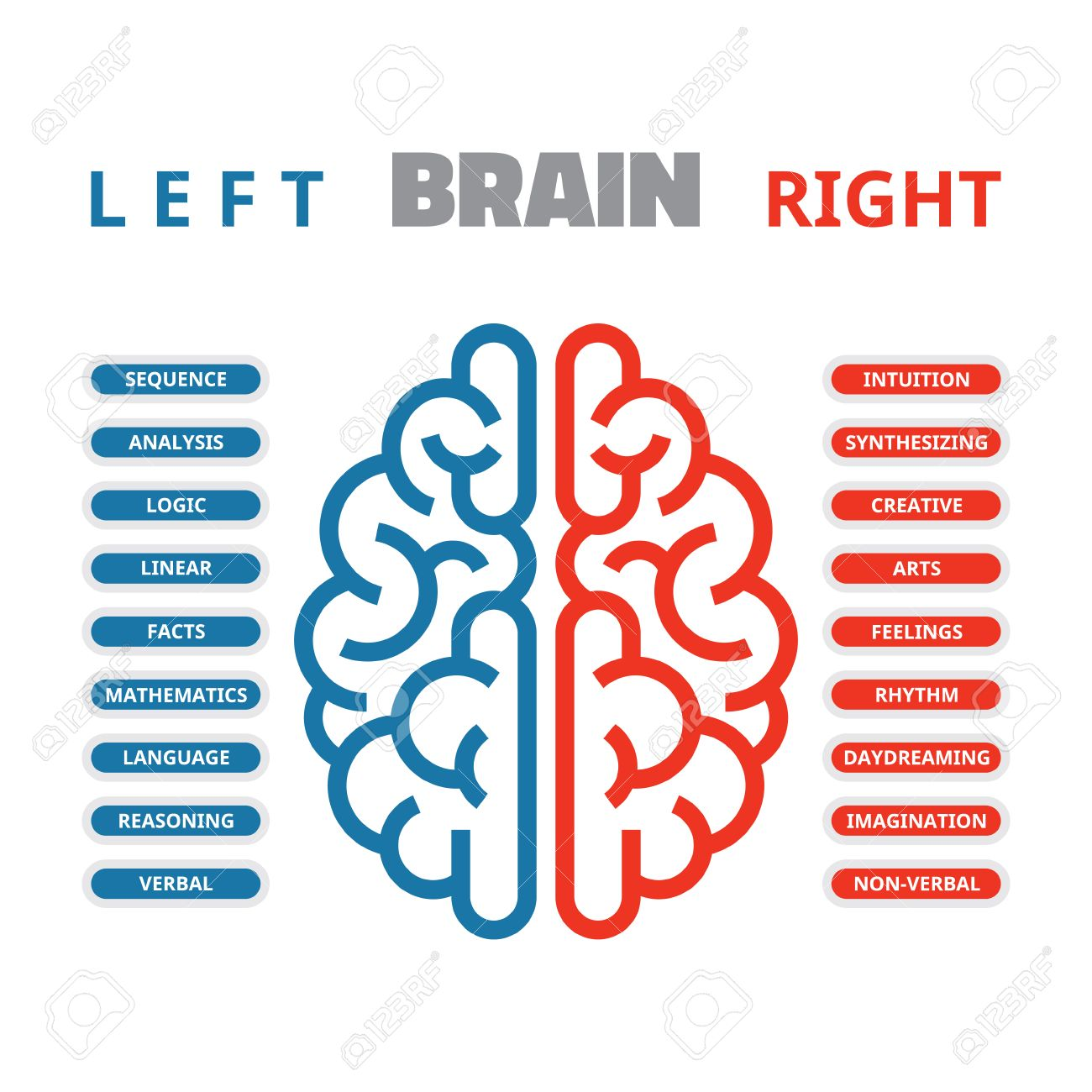 left and right human brain vector illustration for presentation
