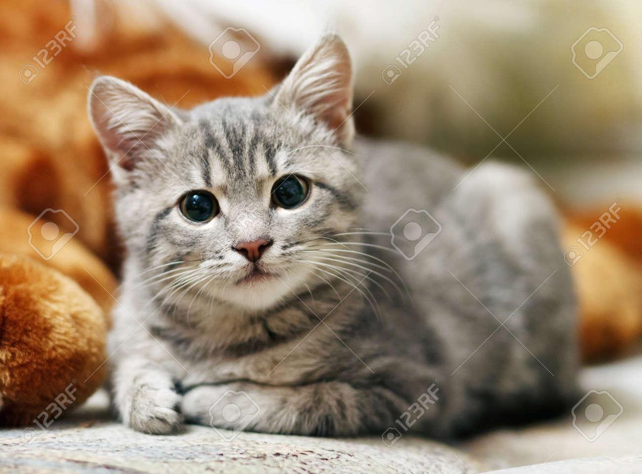 jolies photos de chatte