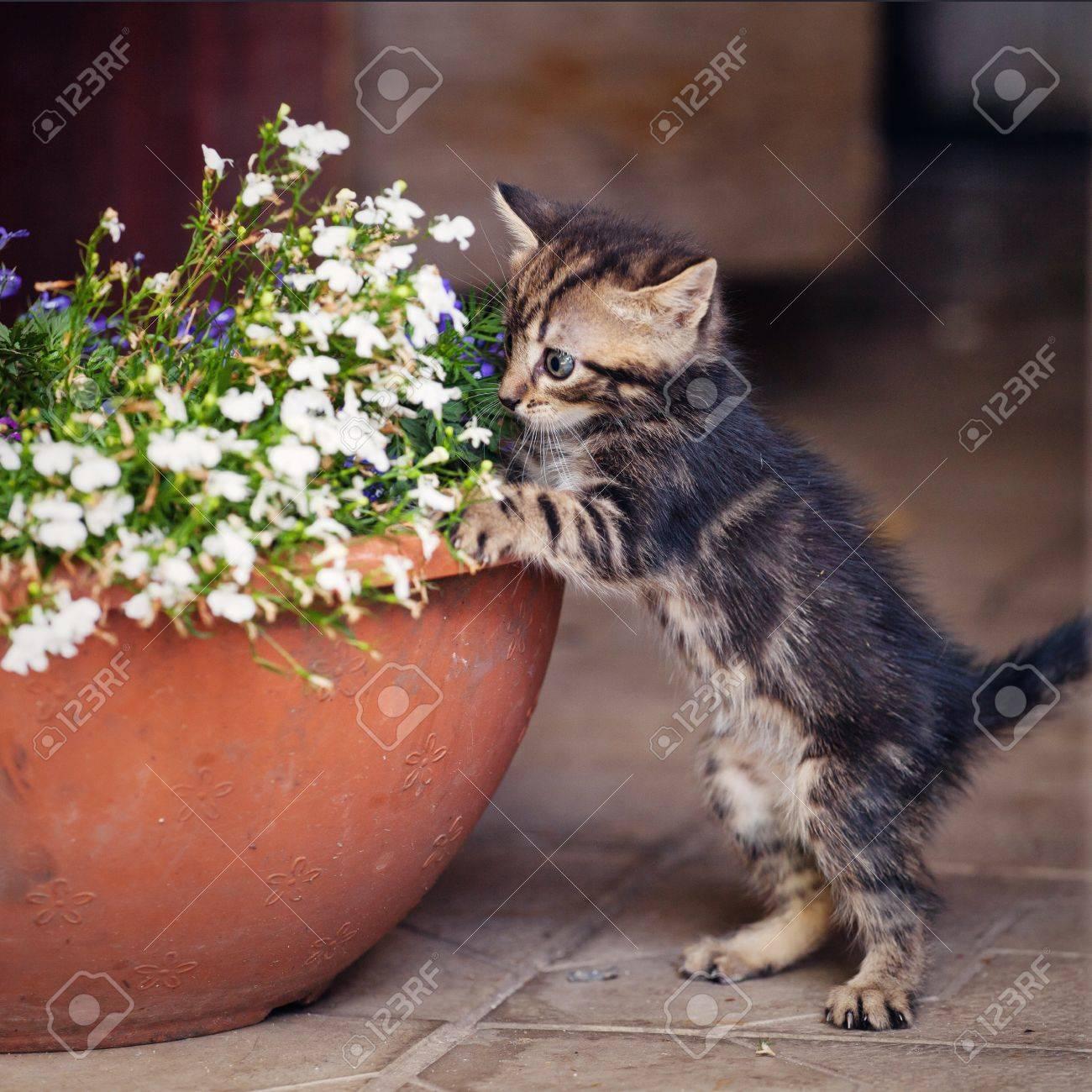 kleines kätzchen spielt in? blumentopf. draussen lizenzfreie fotos