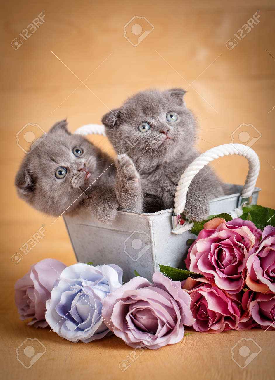 Kittens, Scottish Cat. A Couple Of Cats Near Flowers. Bouquet ...