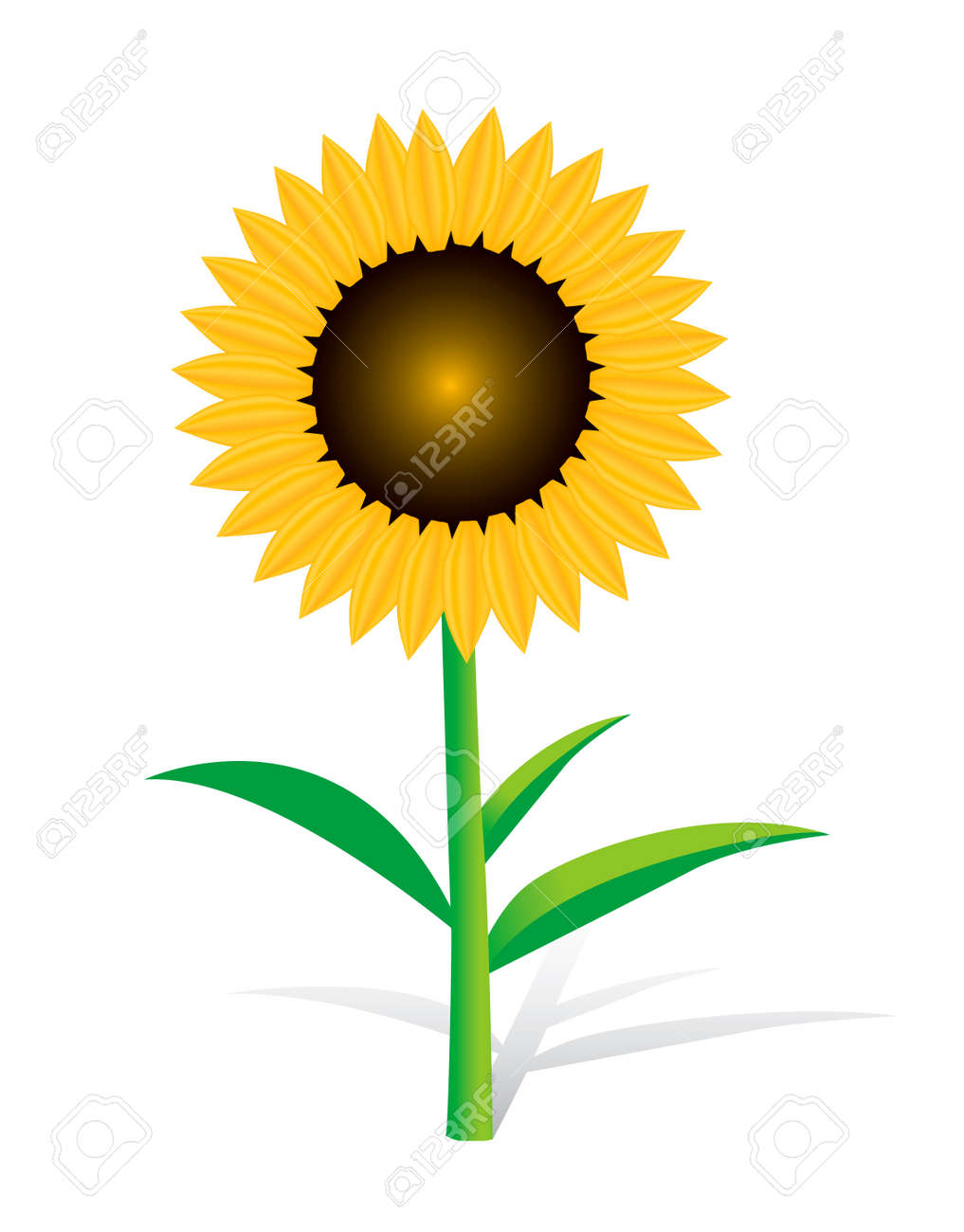 single sunflower cliparts, stock vector and royalty free, Beautiful flower