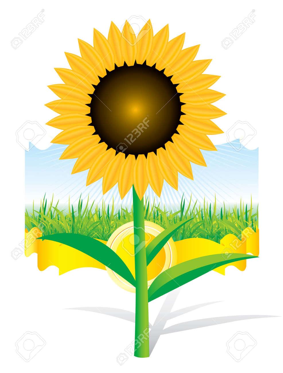 Beautiful sunflower background Stock Vector - 5835433