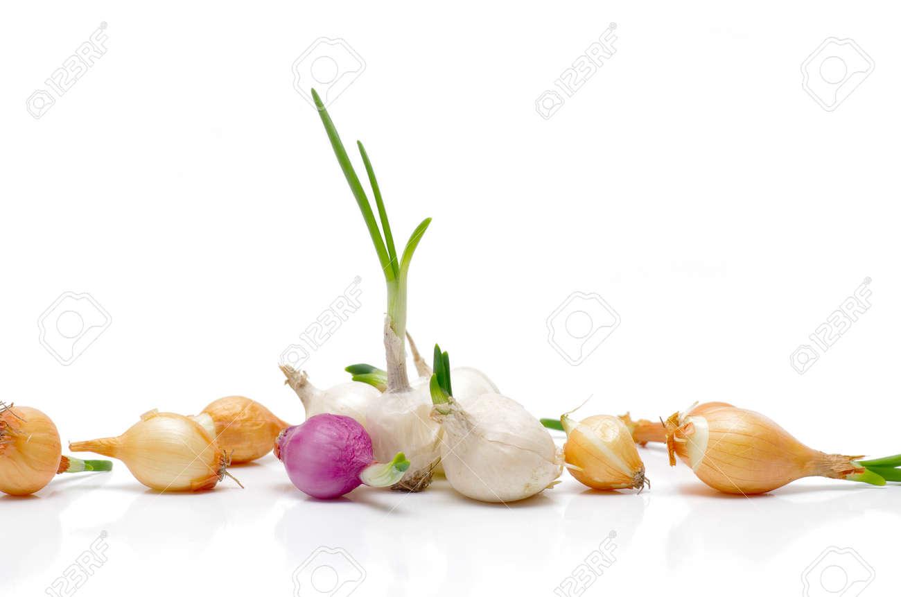 Oignon Blanc A Planter oignons à planter sur un fond blanc