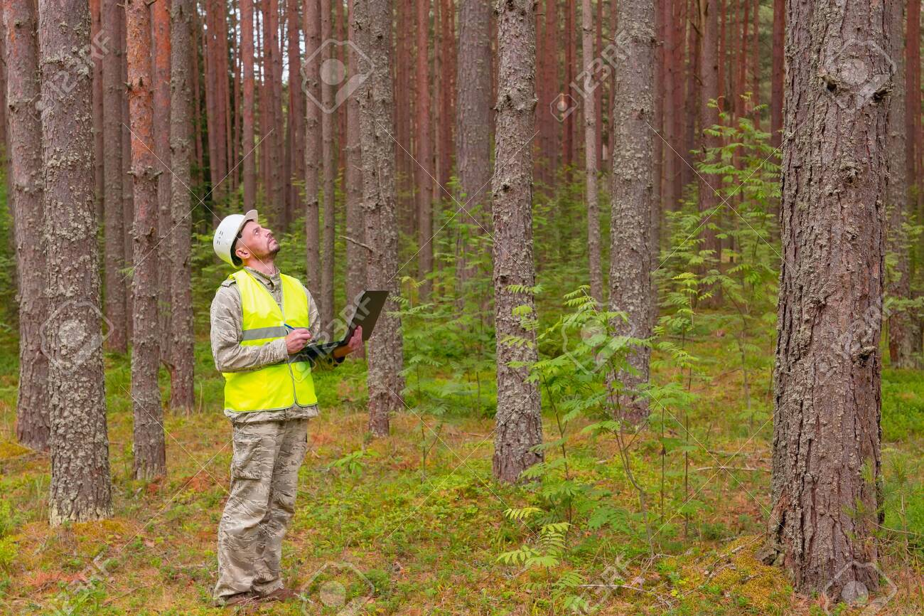 A Forest Engineer Works In A Forest With A Computer. A Man Makes.. Stock  Photo, Picture And Royalty Free Image. Image 138647613.