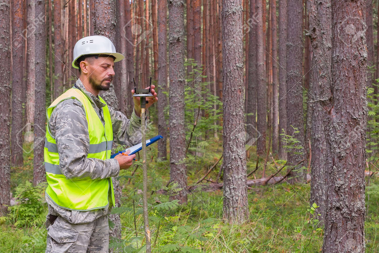 Forest worker works in the forest with a compass. Forestry work concept. - 162257441