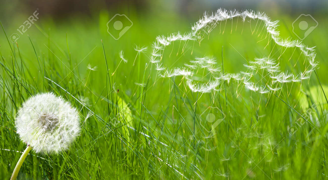 Flying dandelion's seed in form of a car pattern on green grass background - 8374921