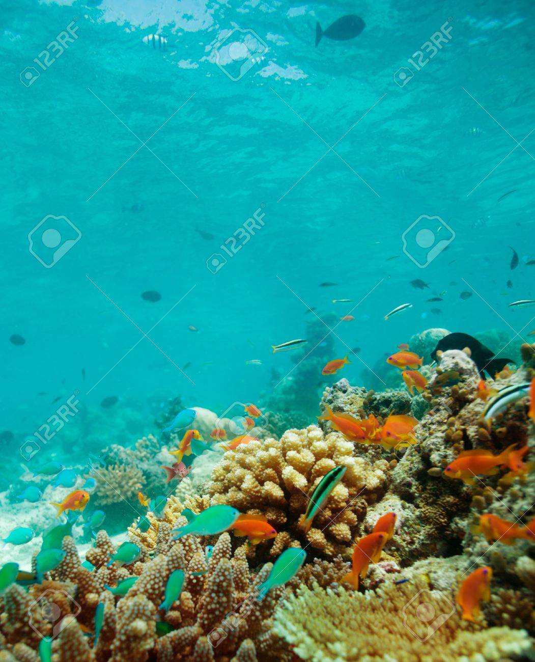 Colony of small fishes on the reef Stock Photo - 11749581