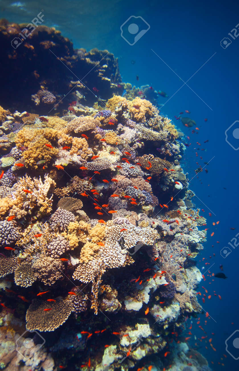 Edge of coral reef with lots of fishes and dramatic deep water on background Stock Photo - 13948859