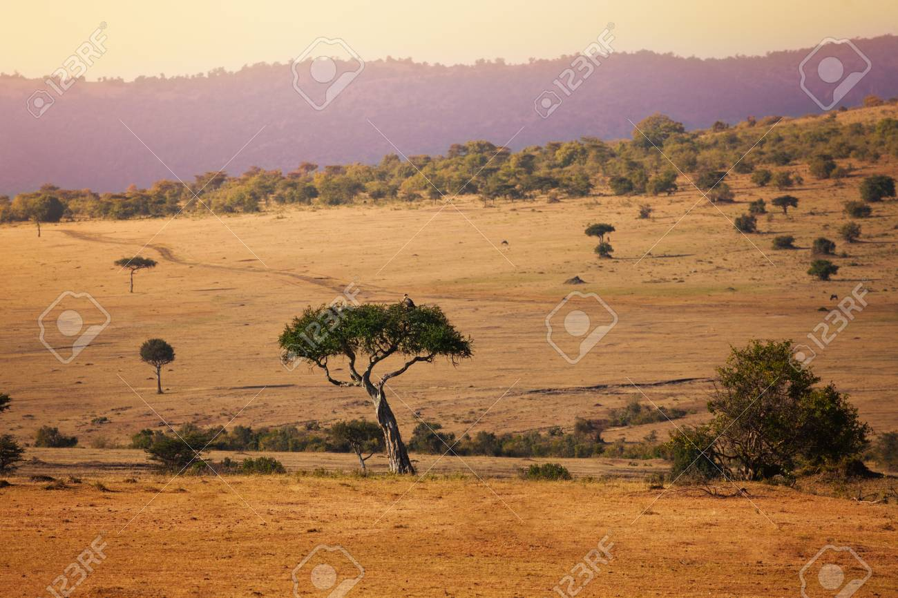Savannah background Kenya Maasai Mara natural park - 116954154