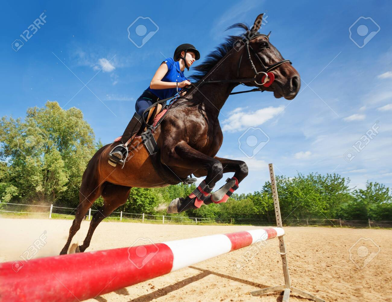 Bay horse with female rider jumping over a hurdle - 129948818