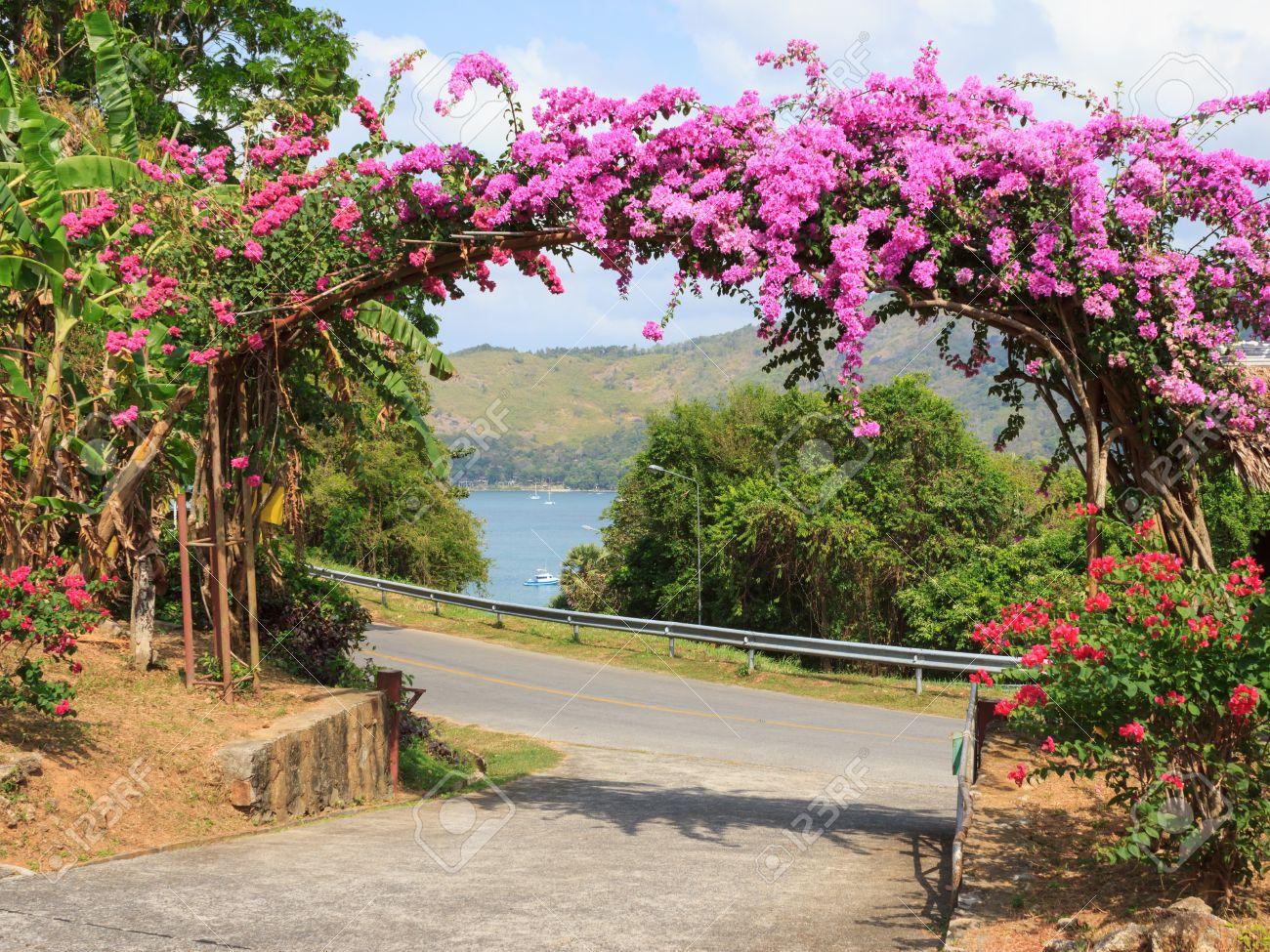Arco De Flores De Color Prpura En El Jardn En La Entrada Fotos