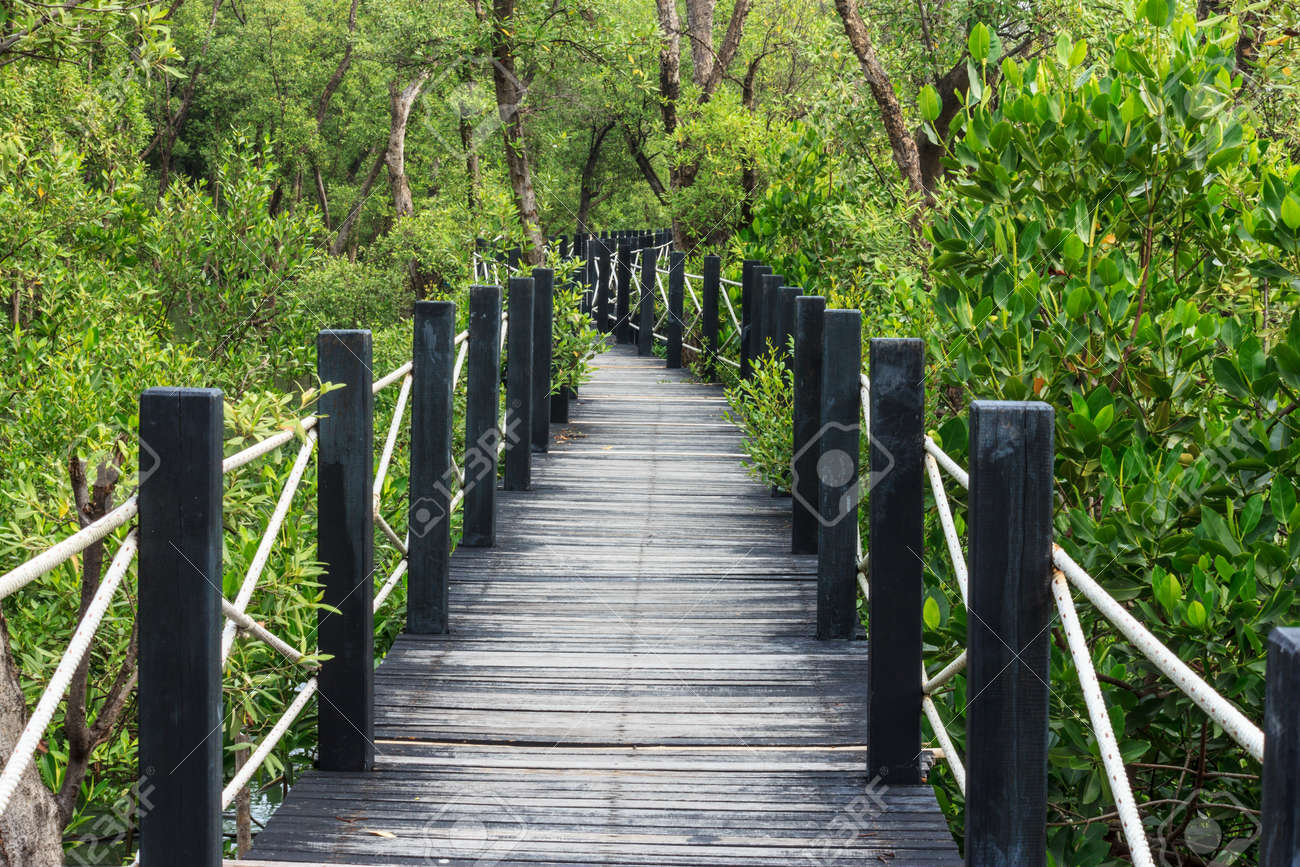 16600756-Board-walk-into-the-mangrove-fo
