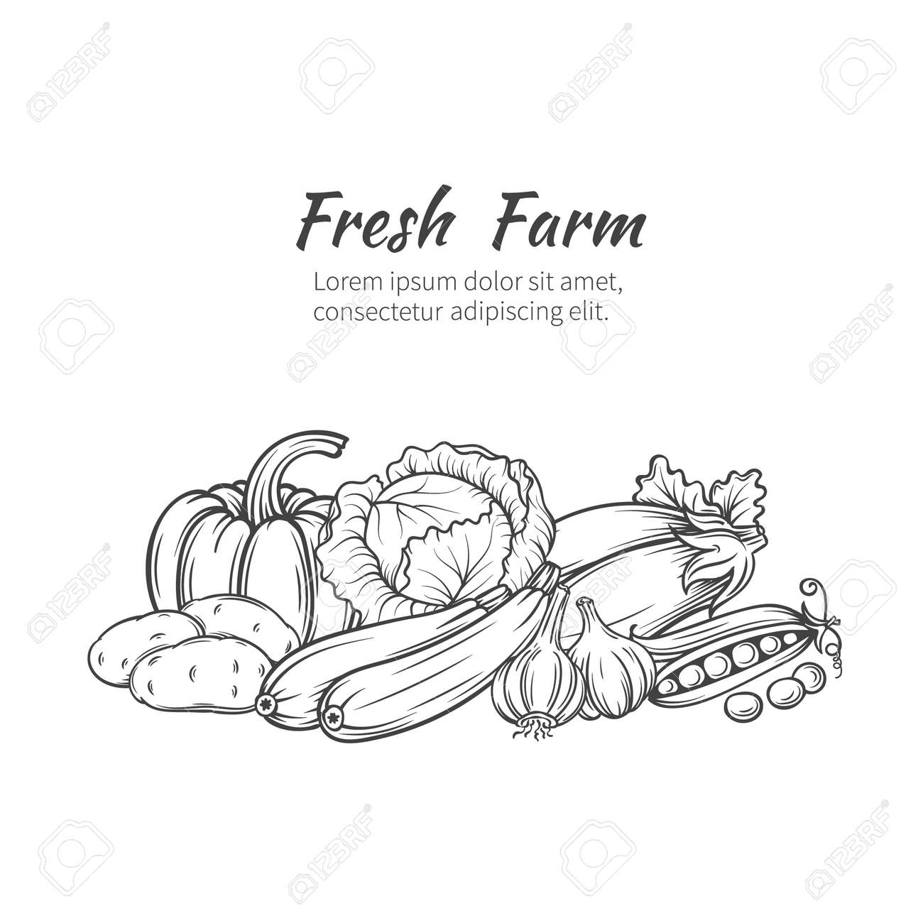 Hand drawn vegetables banner with pumpkin, potatoes, cabbage, zucchini, eggplant, garlic, peas. - 59713910